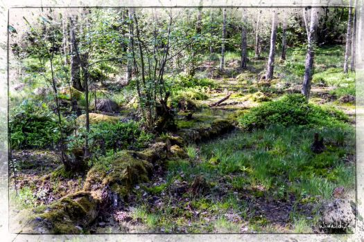 The old forest by wiwaldi24