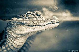 Croco smile by Harleyyfr