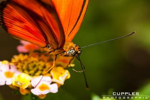 Time Time Take Off by cupplesey