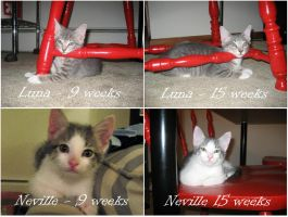 Luna + Neville - 15 weeks by irishgirl982
