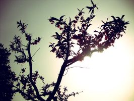 Reaching for the sun by Laura-in-china