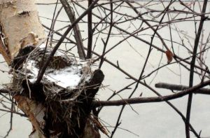 A Winter Nest. by see-you-again