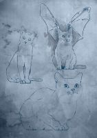 Cats by JonathanWyke