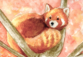 Red Panda by kloobnica