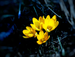 Say Hello to Spring 5 by IoannisCleary