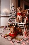Holiday Tollers by DeviantPunisher