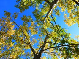 Yellow Canopy by ThundersCry