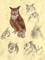 Kihira - virginia horned owl by Chaluny