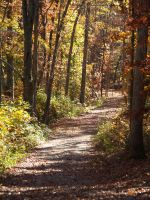 Path in the Wood Stock by Irie-Stock