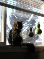 Cat and Gourds by 12monthsOFwinter