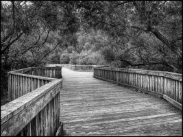 Boardwalk and Willows by grandagon