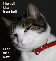 I Izz Evil Kitteh From Hell by rpfaas