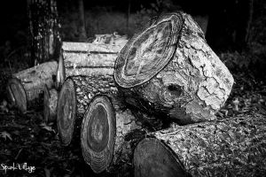 Pine Logs After The Storm Black and White by SparkVillage
