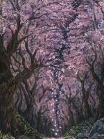 Japanese cherry  blossoms by akamidoriao