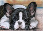 Obi - little french bulldog by WiccanSoul