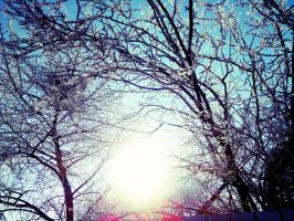 sunny winter frozen trees by LETSOC