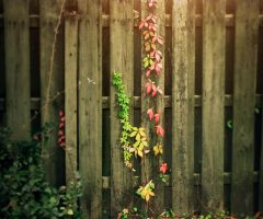 Fence Vine by Rusty001