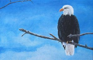 The Eagle does not Catch Flies - acrylics by Giselle-M