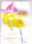 Pansexual Daffodil -Revision- by Rosenezz