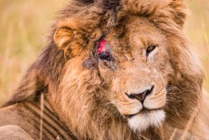 Wounded Pride by JustinBowen