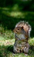 A Squirrel in Montreal by Geater