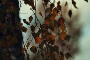 We Are Nothing But Falling Autumn Leaves by LindaMarieAnson