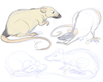 Rats by Husky-Foxgryph