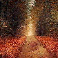 Autumn path by Justysiak