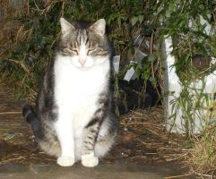 On The Farm Sox the Cat Aug 29th by SmellzLikeRoses