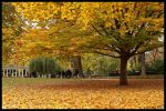 Fall In Monceau Park by ZonWernor