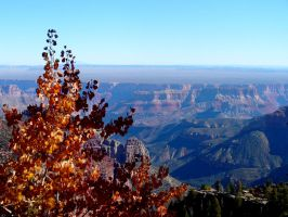 Autumn in the Grand Canyon by AndySerrano