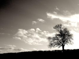 Lone tree in Silhouette by muzzy500