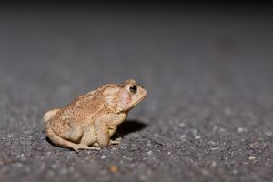 Sitting Toad by blepfo