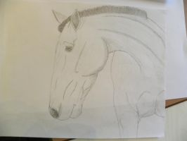 Short Mained Stud by patchesofheaven74