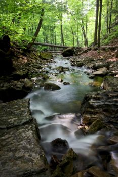 Green Stream by Spankreas