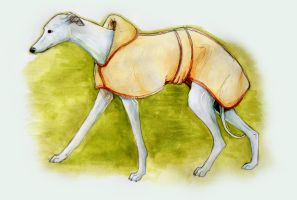 Whippet by Ellakins