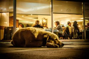 night dog by benbey