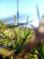 Grass at the Park by HopeAnDeloI
