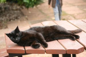 Lazy Black Cat 2 by RaeyenIrael-Stock