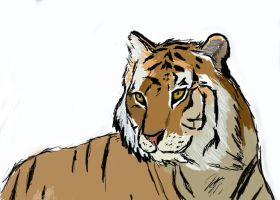 Tiger Drawing by twotooto