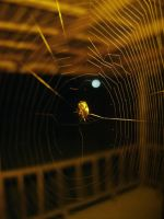 Spider Macro by Bnuldun