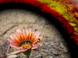 color in the dirt by christiline88