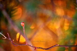 drops of honey by knowhopeinme