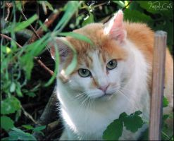Still Not Fond Of The Camera by Feral-Cats