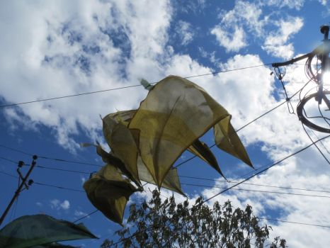 Yellow Prayer Flags in the Blue Sky by Ptolemeia
