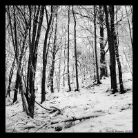 Winter Forest by hquer