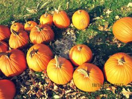 Pumpkins by cocoagirl654