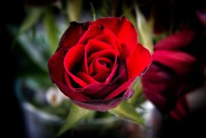 From the love of my life  by myworld247