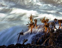 Kelp Storm by Tanager