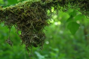 Moss by seabug